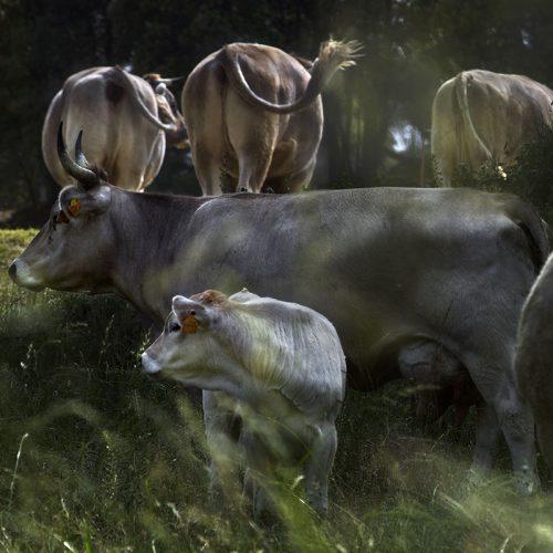 vaques_04